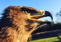 Raptor Award in Training & Keeping birds of prey | Fens Falconry