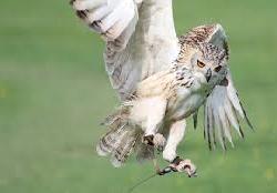Owl1611754980