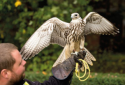 Bird of Prey Jobs